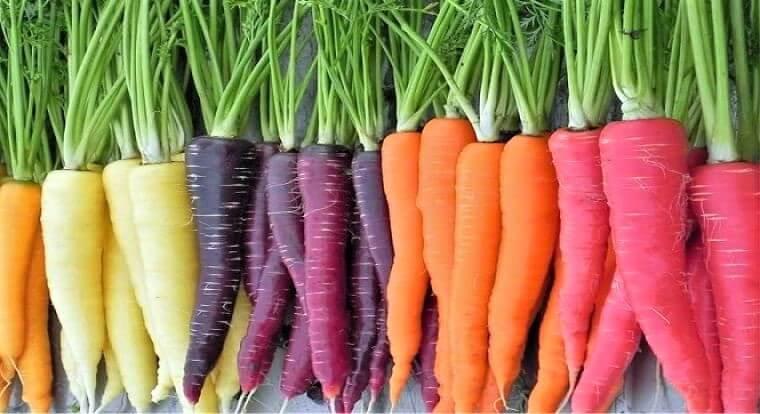 cultivares-zanahoria