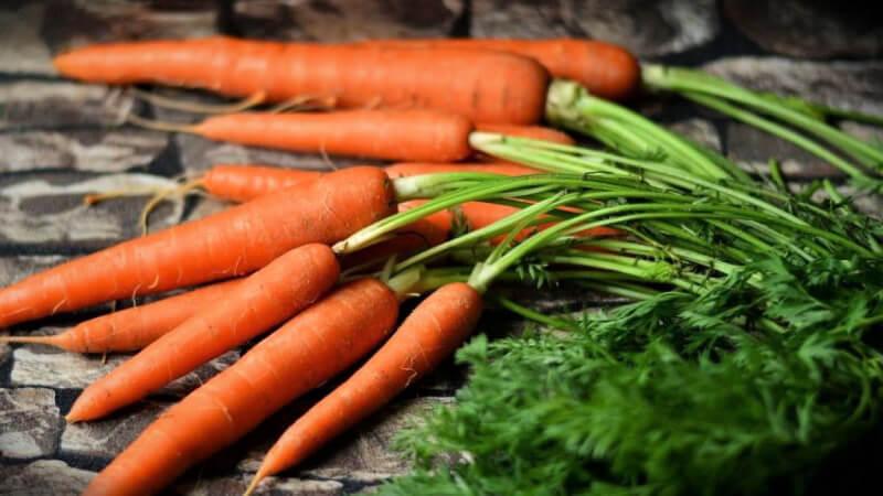 zanahoria-daucus-carota
